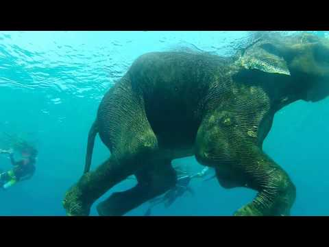 Copy of Swimming With Elephant Andaman Islands