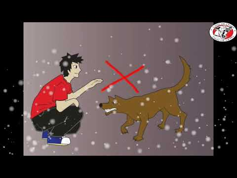 أشياء قد تفعلها يكرهك الكلب