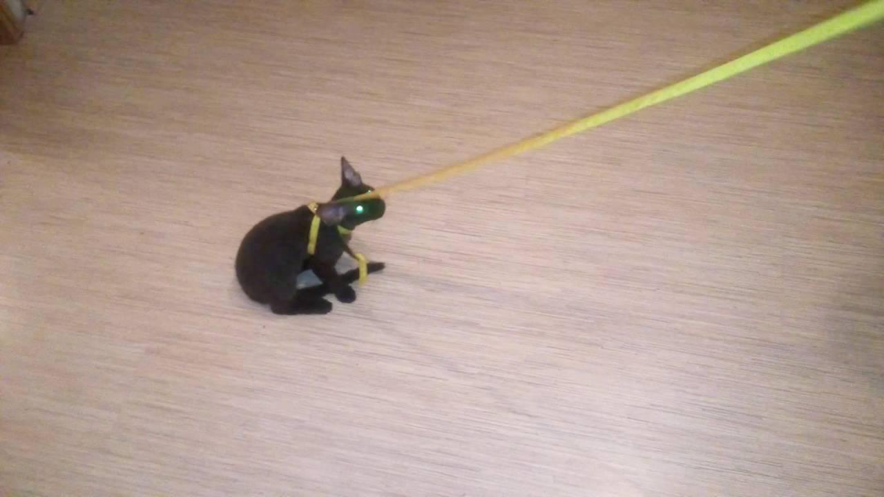 Как сшить кошке поводок