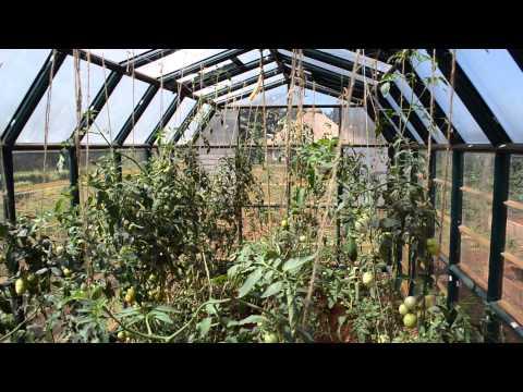 ReACT Kenya Greenhouse