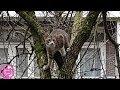 Cute Cat Stuck In A Tree