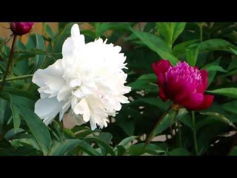 Цветы обои для рабочего стола, картинки цветов на рабочий
