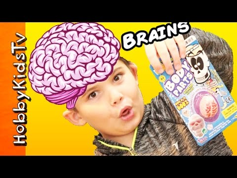 GROWING BRAINS! Cut Up Soak N Grow Brain + Surprise Toy, Science Review Body Parts HobbyKidsTV