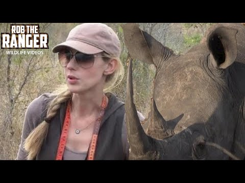poisoning-rhino-horns-to-save-the-species-|-rhino-rescue-project