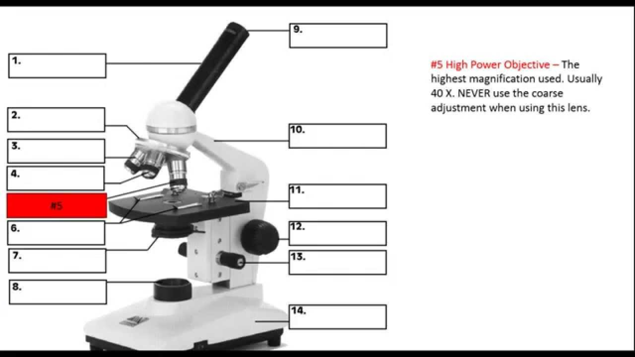 Ch1 Lesson 6 The Parts of a Microscope - YouTube