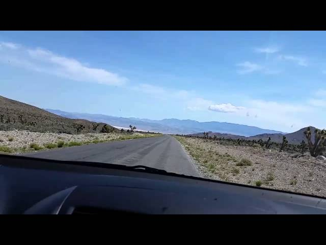 Wild Horses in Cold Creek Nevada