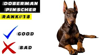 Doberman Pinscher Pros And Cons   The Good And The Bad