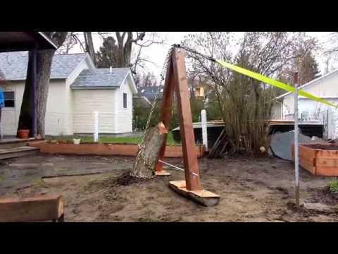 Pulling a Stump Using a Truck and Mechanical Advantage