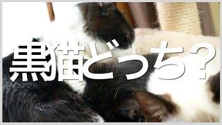 【問題】黒猫どっち?