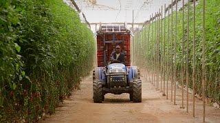 مبادرة تكيف الزراعة في إفريقيا مع التغيرات المناخية