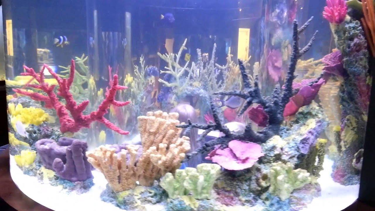 South Florida Science Center and Aquarium - YouTube