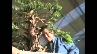 Masahiko kimura, demostracion de bonsai