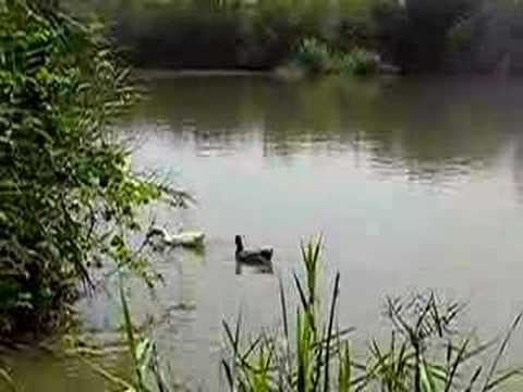 Yakum nature reserve: More ducks