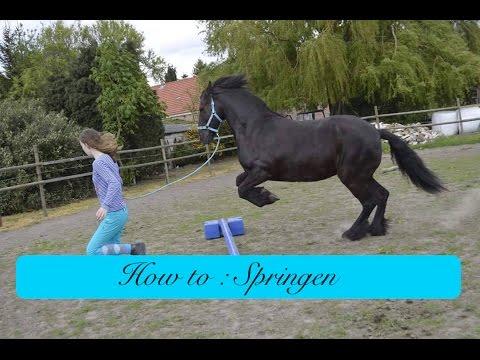 Hoe leer ik mijn paard springen?