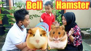BELI HAMSTER LUCU | eybel channel