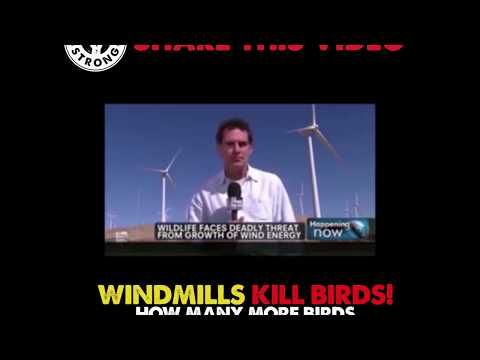 Windbill decimates the bird population