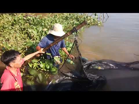 80% waste of time in this video? - A catching fish scene in Mekong river