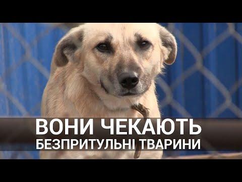 PressClub Lviv: Безпритульні собаки