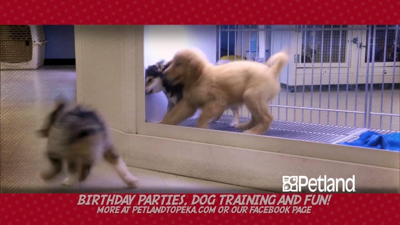 Free puppies in topeka ks