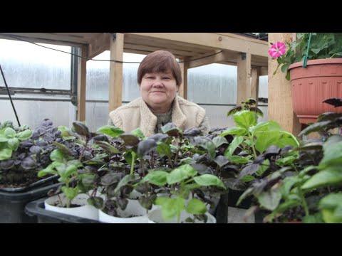 Вопрос: Как вырастить базилик?