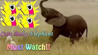 MUST WATCH!!! Funny and Cute Baby Elephant Videos