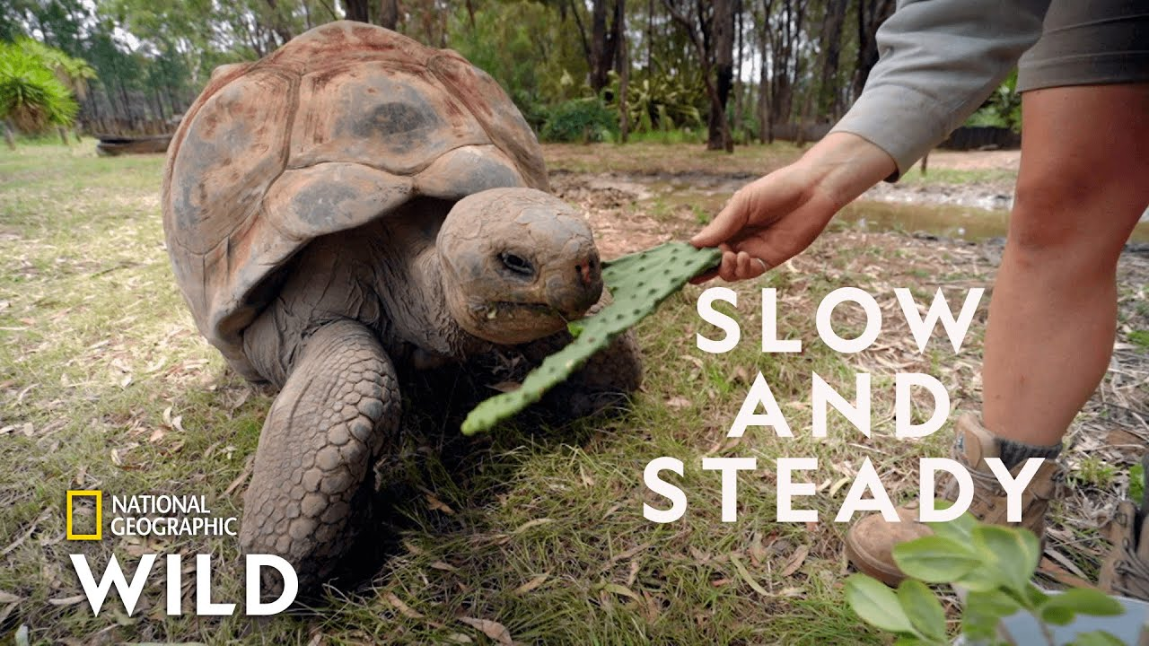 The Largest Turtle Species | Secrets of the Zoo: Down Under