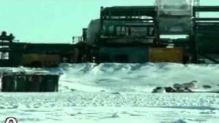 Polar Bears Awake To Find Oil Rig Built Around Den - Video thumbnail