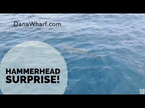 Hammerhead Shark startles passengers