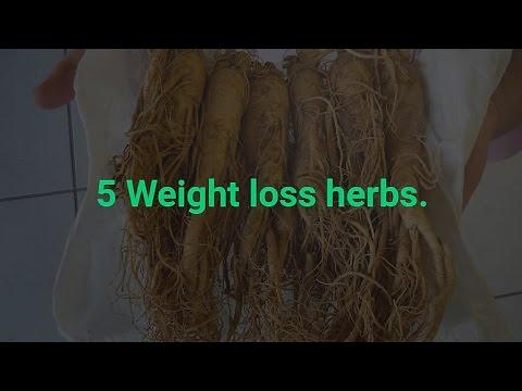 5 Weight loss herbs