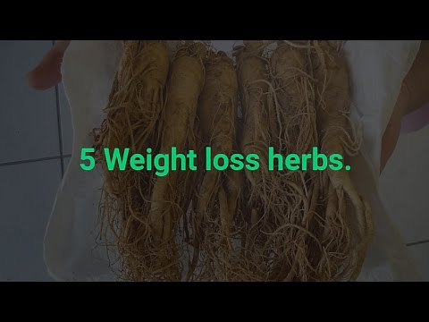 5-weight-loss-herbs