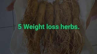5 Weight loss herbs