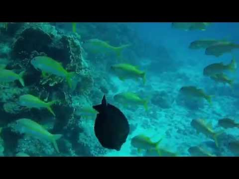 Tauchsafari Ägypten/Diving Red Sea