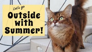 Cat Training Outside with Somali Cat Summer