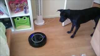 lunatic dog v robot vacuum cleaner