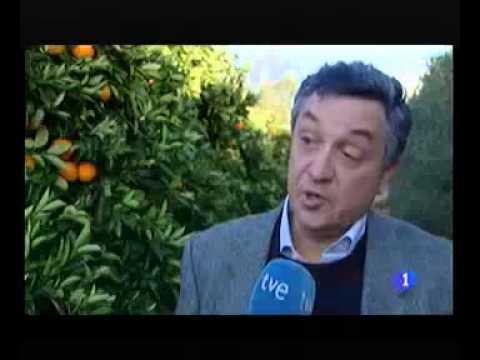 FIGARO TVE 2014