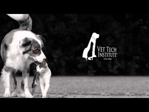 Vet Tech Institute: Loving Animals of All Shapes and Sizes
