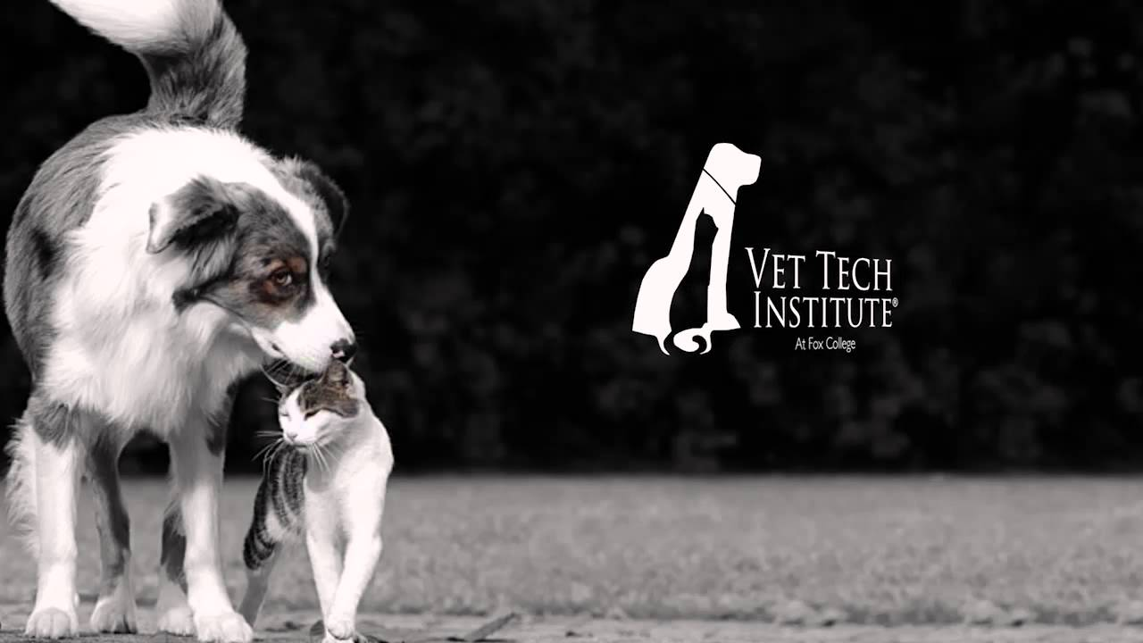 Vet Tech Institute Loving Animals Of All Shapes And Sizes Youtube