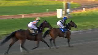 Vidéo de la course PMU PRIX VASTKUSTENS PARLA - MONTÉLOPP
