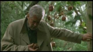 The Last Offering Director's Cut Spanish Subtitles