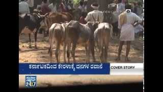 Cow slaughter ,the illegal cattle mafia   Cover Story (ಕವರ್ ಸ್ಟೋರಿ)part3