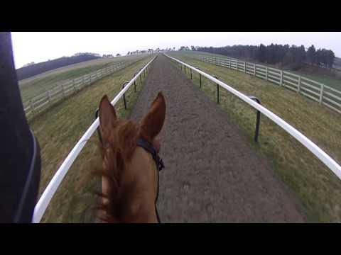 Kelsall Gallops from a rider's view! (hatcam)