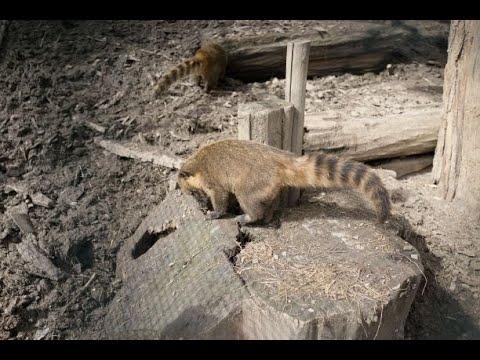 لندن: استمرار إغلاق حديقة الحيوان أمام الزوار  - نشر قبل 21 دقيقة