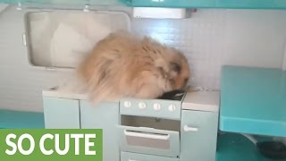 hamster-explores-his-own-personal-kitchen