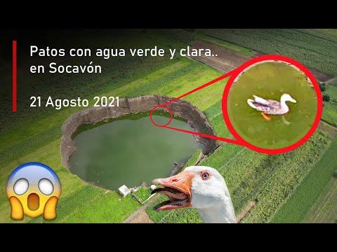 Patos con agua verdosa y transparente en Socavón Puebla Hoy 21 Agosto 2021