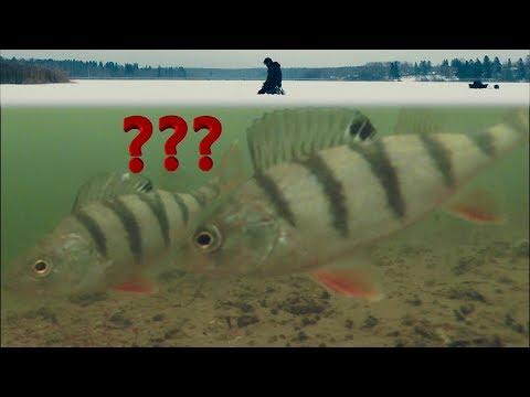 Безмотылка или Мормышка с мотылем??? Выбор Окуня! Первая Зимняя Рыбалка 2018 и Подводная съемка