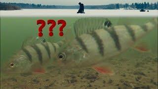 видео Мормышки на окуня для зимней рыбалки