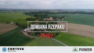 Demo Farma w Rogowie - Ocena odmiany marki Pioneer PT297 rzepaku ozimego