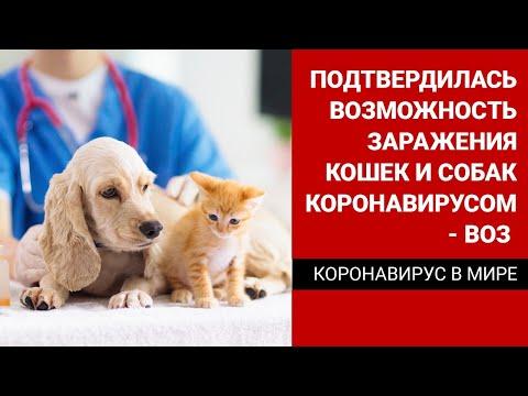 Подтвердилась возможность заражения кошек и собак коронавирусом – ВОЗ