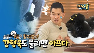 Fluffy doll poodle don't hold back! 'Kang trainer also hurts if got bitten' │ Mungschool puppy class