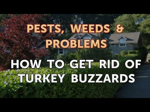 How to Get Rid of Turkey Buzzards